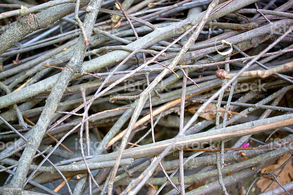 dry branches and sticks stock photo