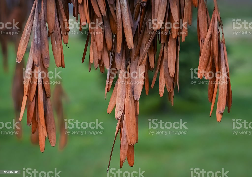 Dry brown leaves stock photo