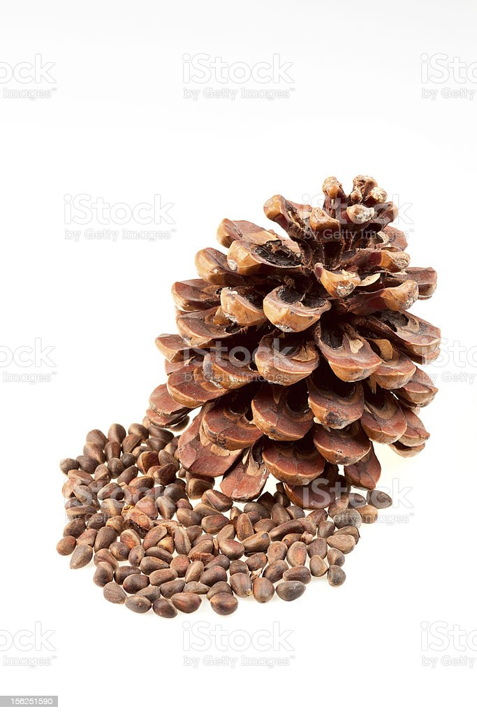 Dry brown Pine cone with nuts royalty-free stock photo
