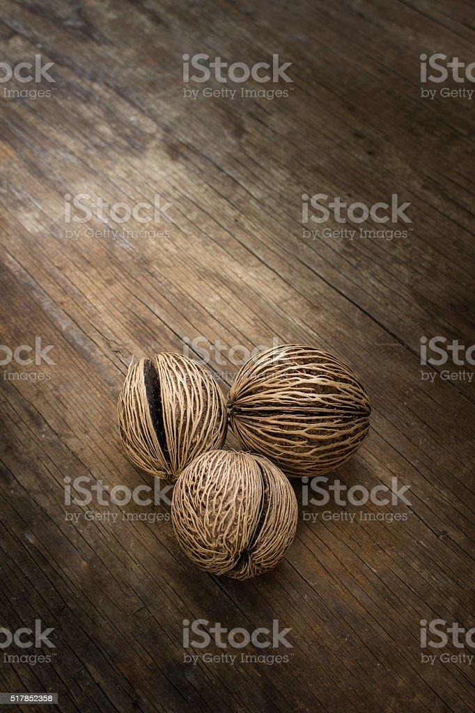 Dry Cerbera oddloam's seed stock photo