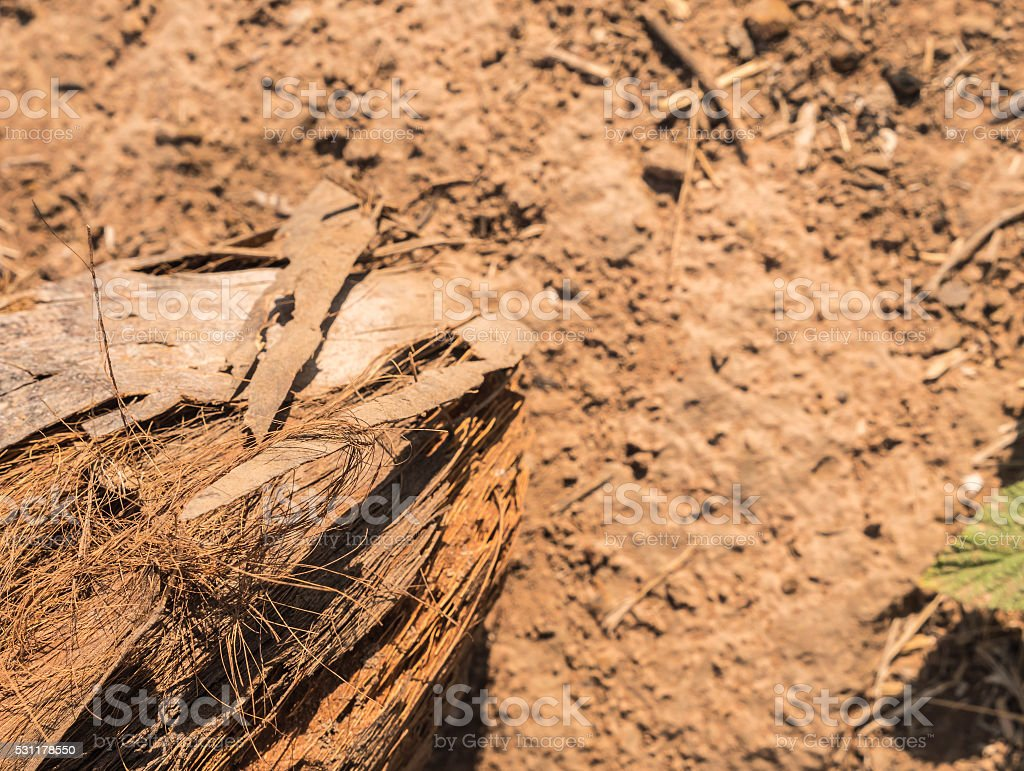 dry coconut on the ground stock photo