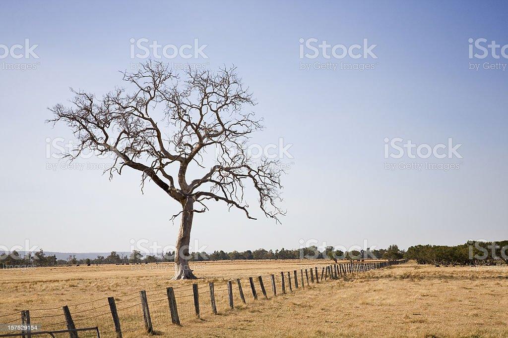 Dry Dead Tree royalty-free stock photo
