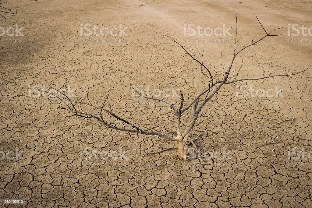 Dry dead trees in dry areas. Separate ground. stock photo