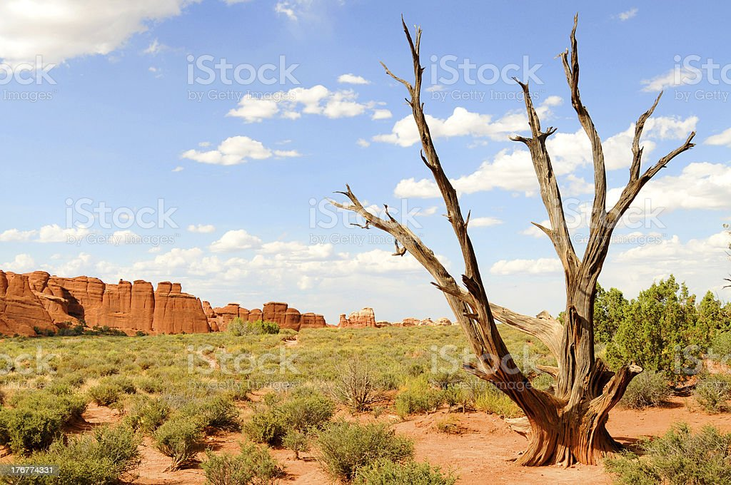 Dry desert landscape royalty-free stock photo