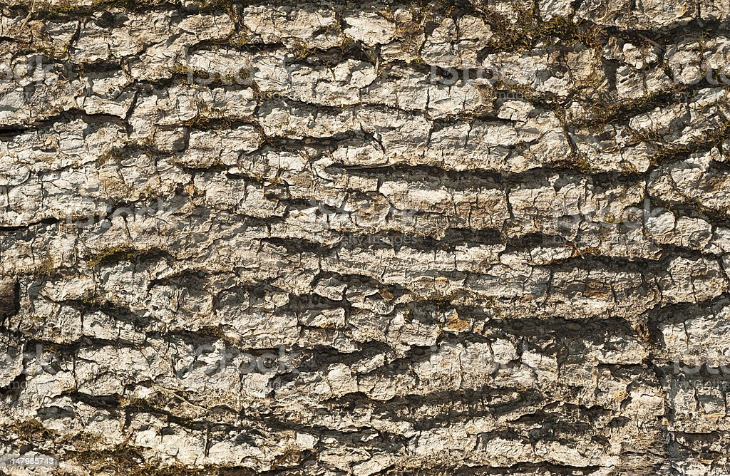 dry driftwood bark texture stock photo