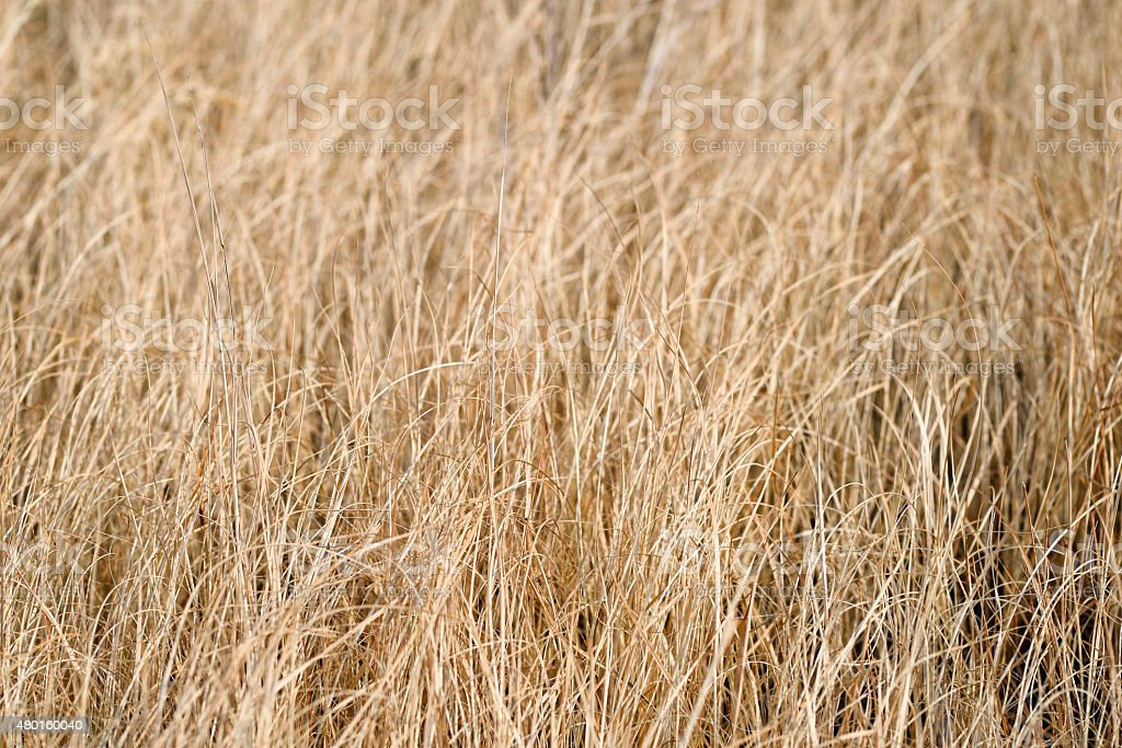 Dry faded grass stock photo
