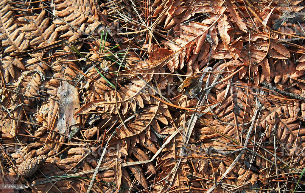 Dry fern leaves on forest floor stock photo