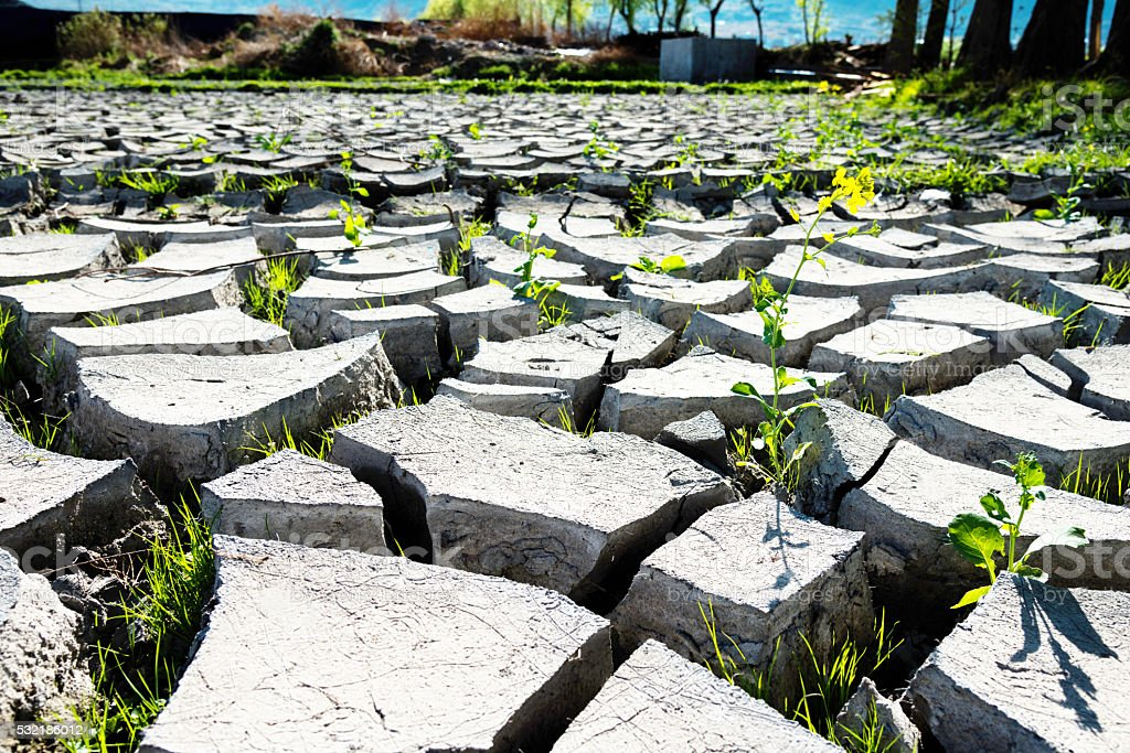 Dry field and small green plant stock photo