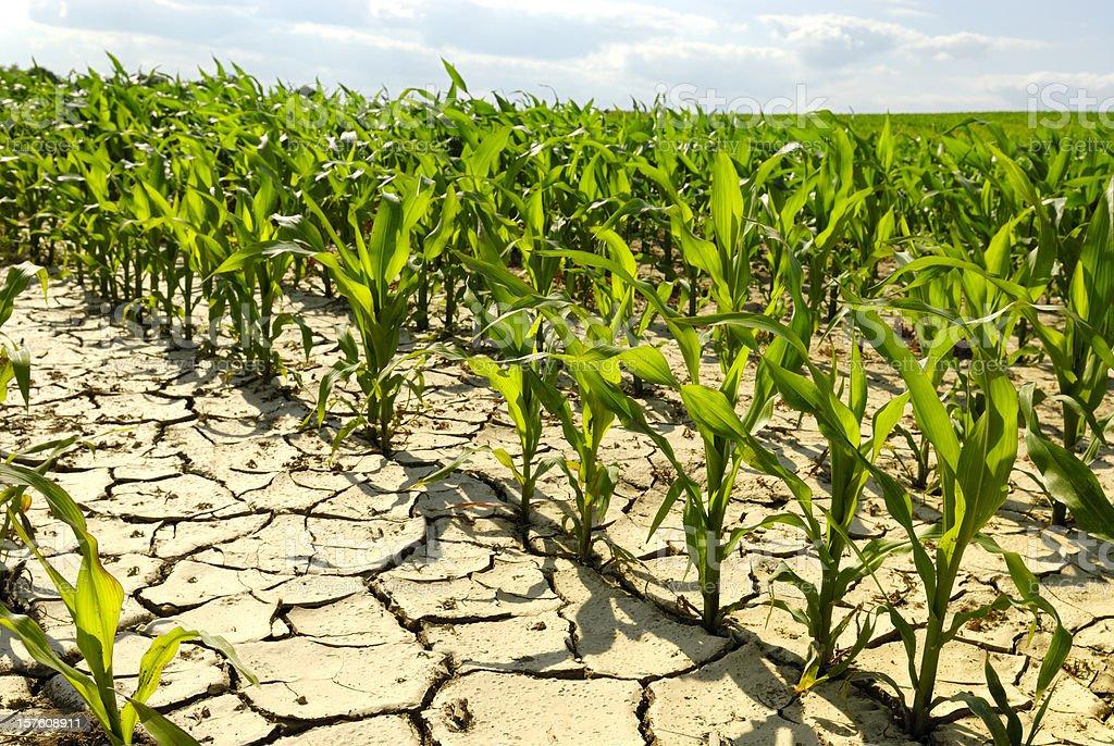 dry field stock photo