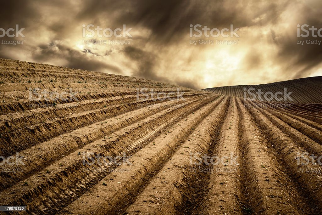 Dry fields in a dramatic light stock photo