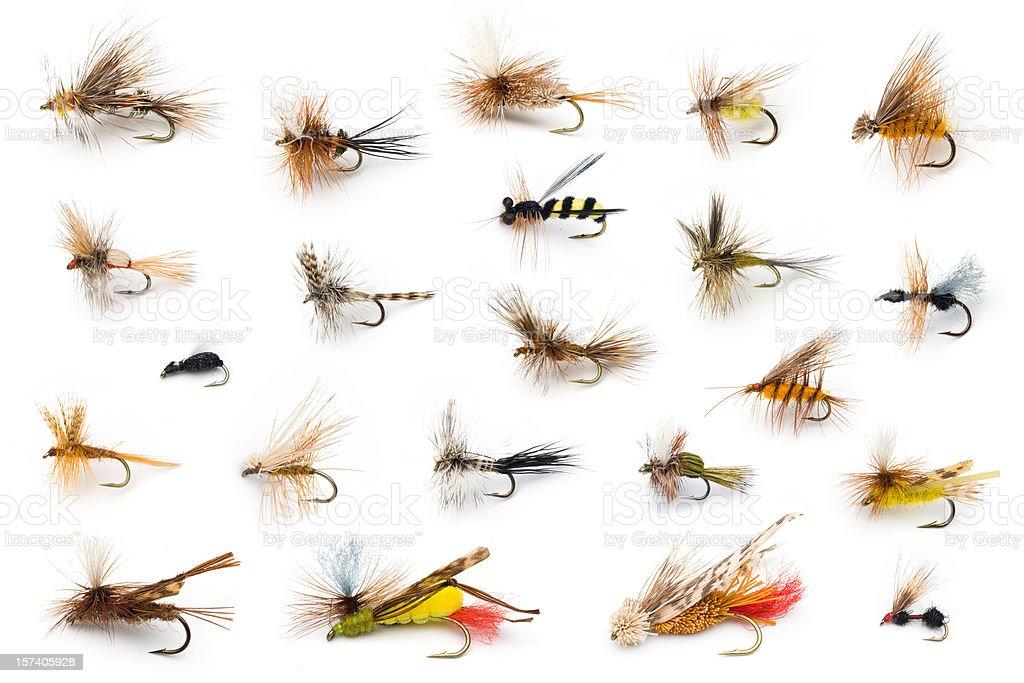 Dry Flies stock photo