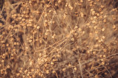 Dry flora background