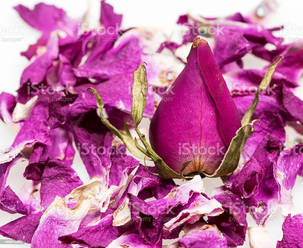 dry flower rose stock photo
