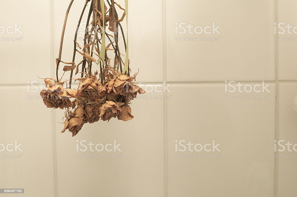 Dry flowers against tiled wall stock photo