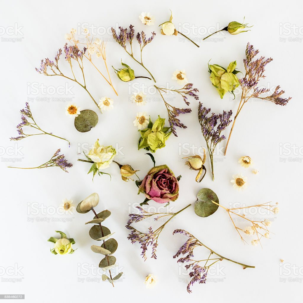 Dry flowers on white background. Top view. Flat lay stock photo