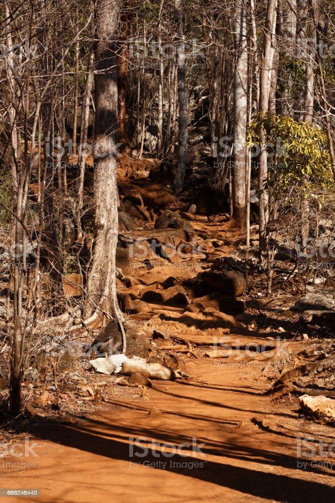 dry forest reserve in Ankarana, Madagascar wilderness stock photo