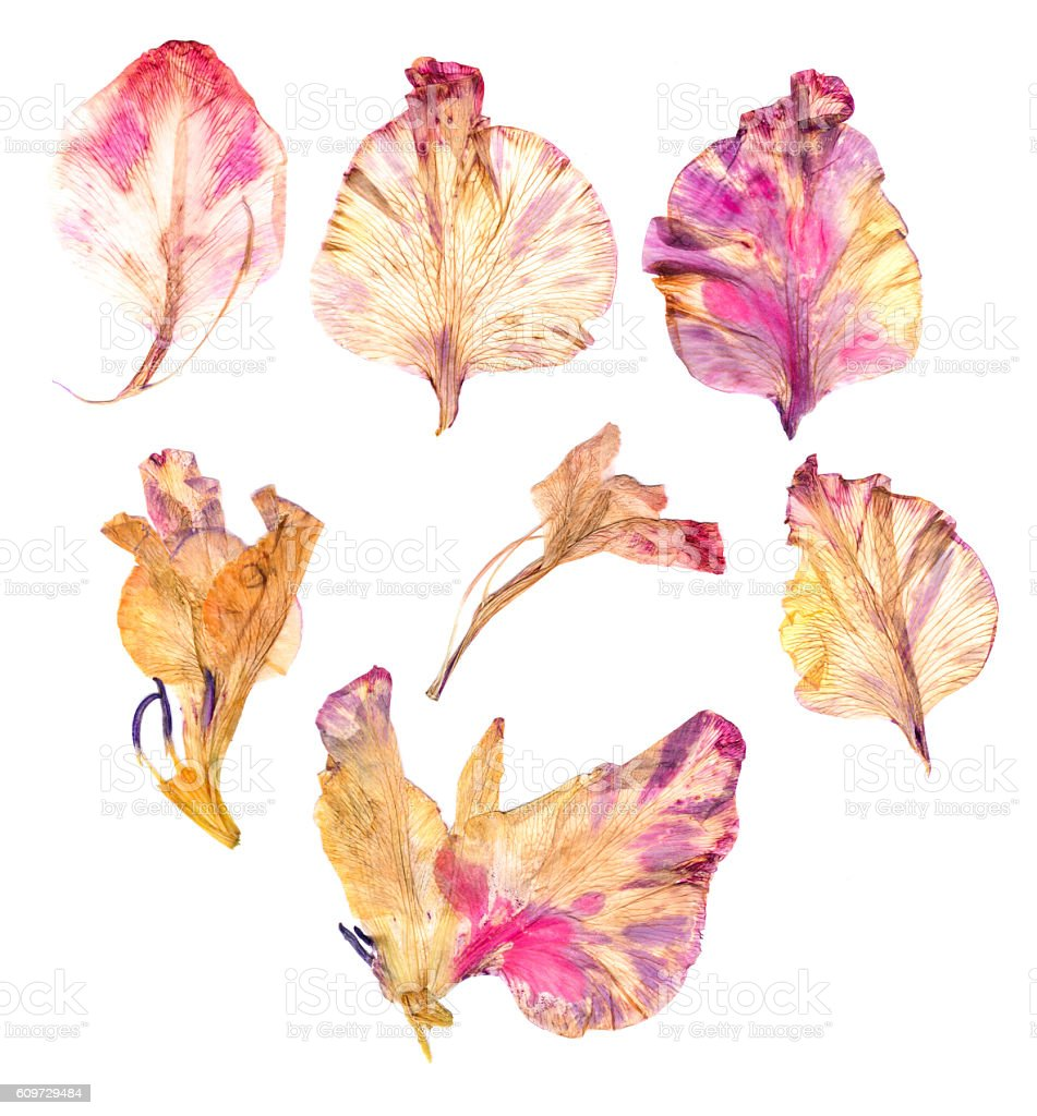 Dry gladiolus flower petals stock photo