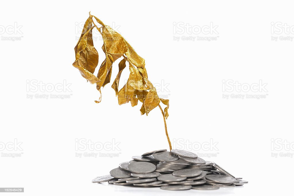 Dry golden plant on coins royalty-free stock photo