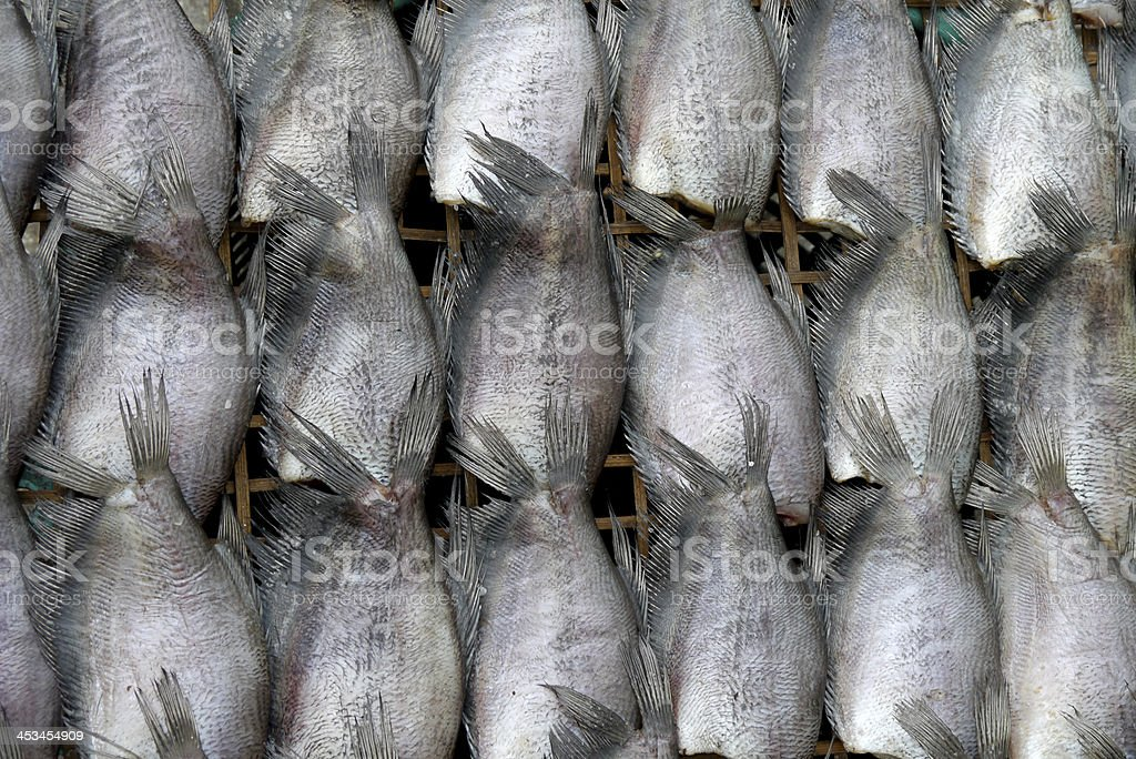 Dry Gourami fish royalty-free stock photo