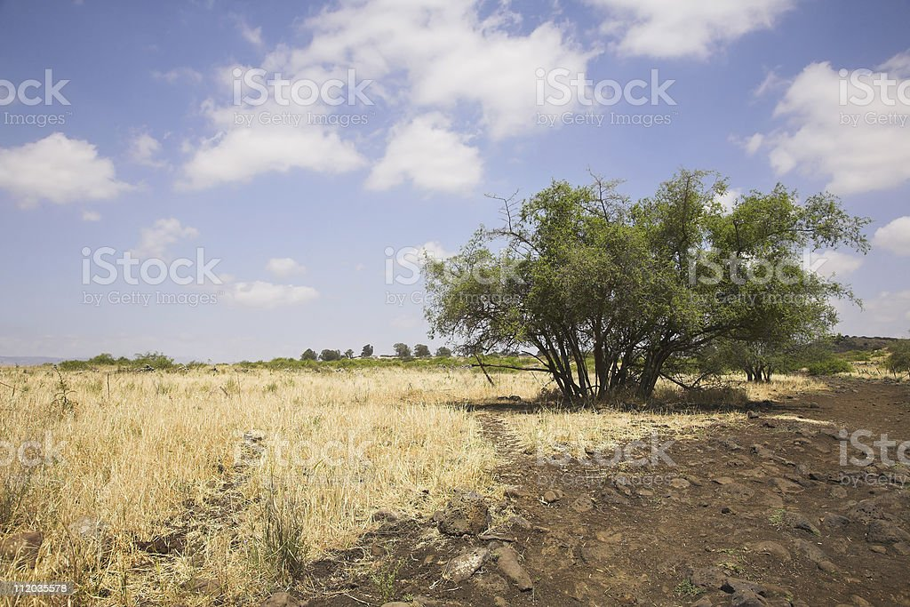 Dry grass and a tree royalty-free stock photo