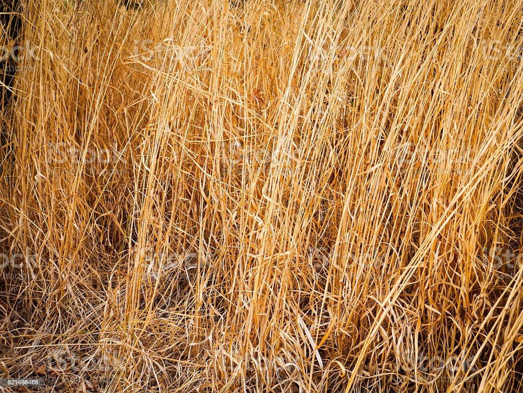 dry grass autumn stock photo
