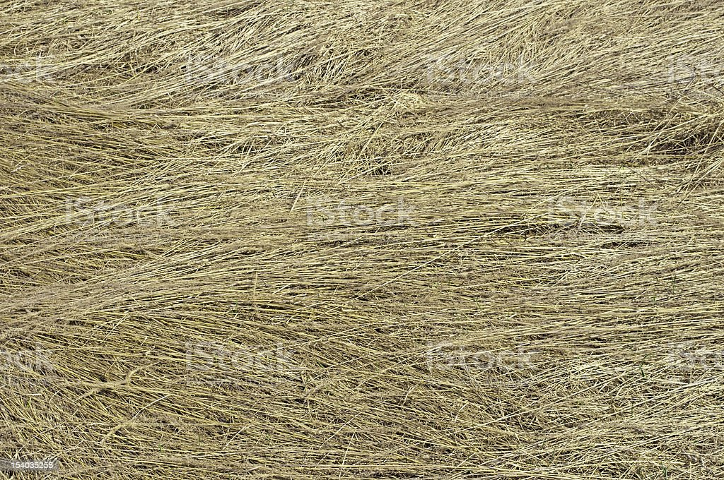 Dry grass background stock photo