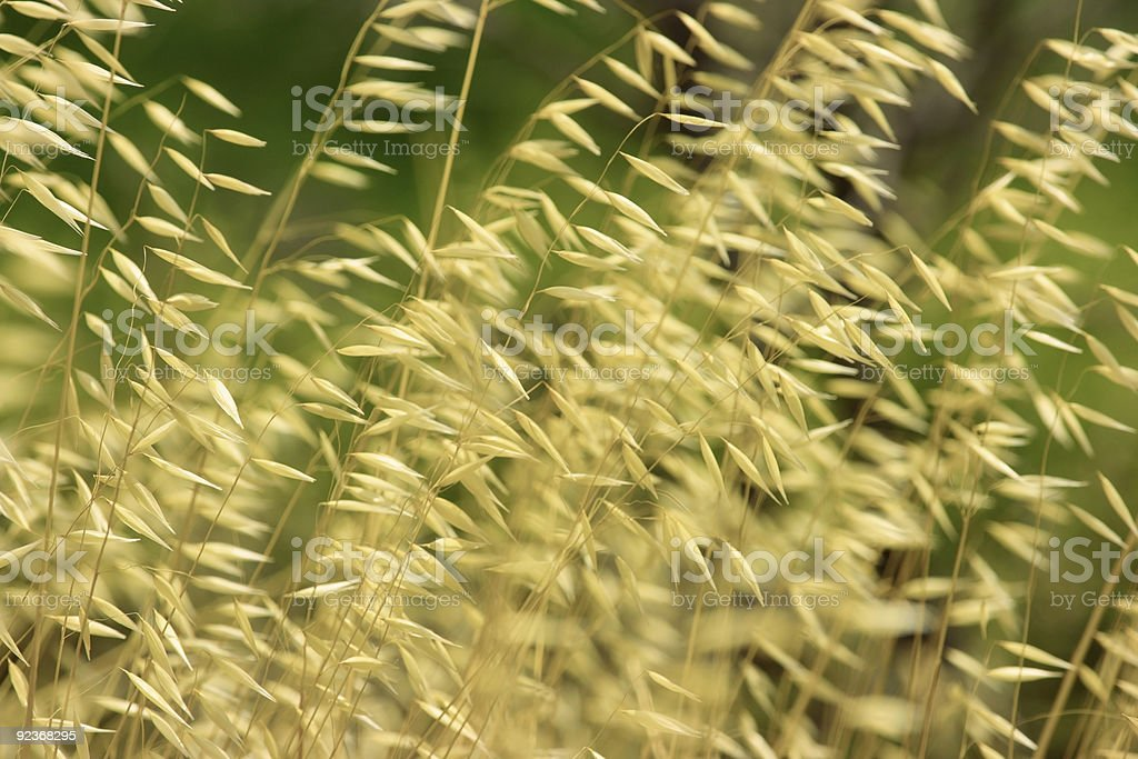 Dry grass background royalty-free stock photo