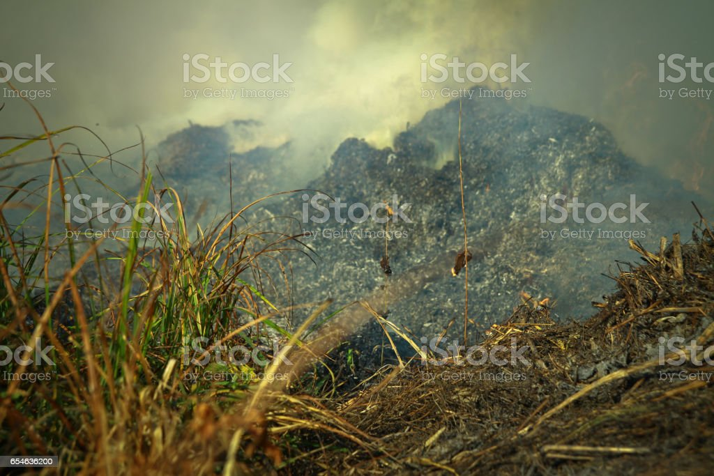 Dry grass burning in the early spring. Burning wood, peat, tragedy and disaster in the field. Background stock photo