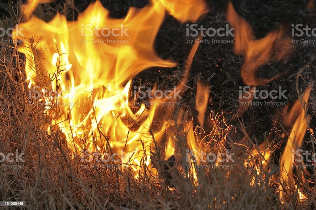 dry grass burning with wildfire stock photo