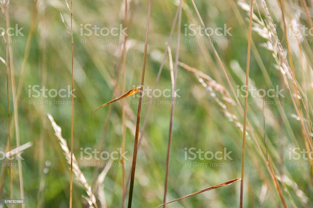 Dry grass close-up seasonal nature background_1 stock photo