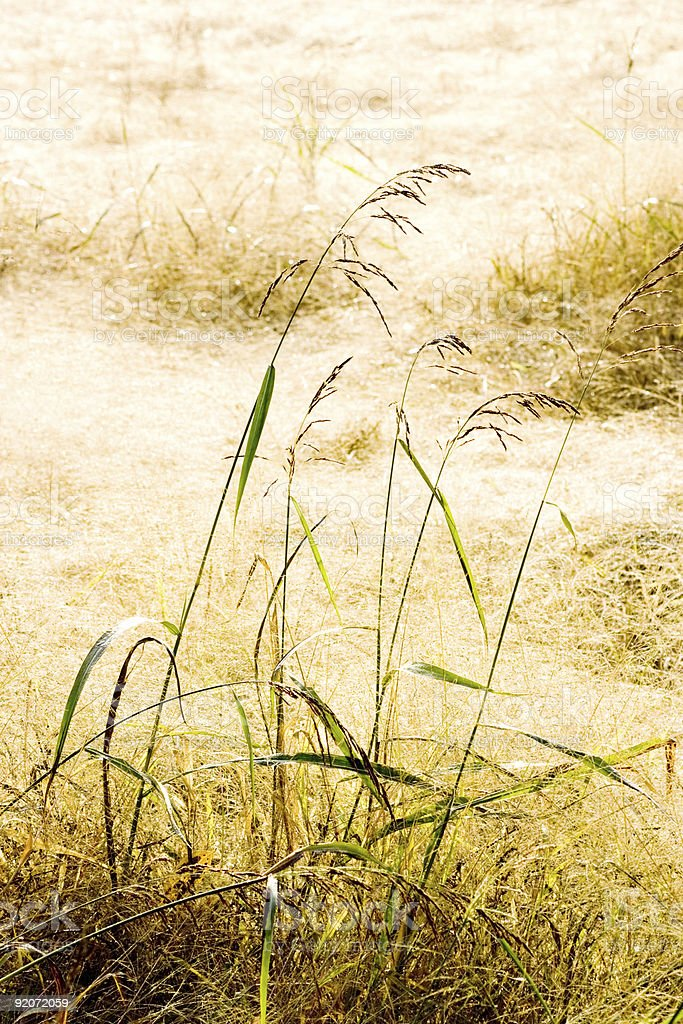 Dry Grass Field royalty-free stock photo