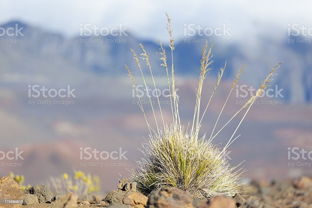 Dry Grass In Haleakala Crater, Maui royalty-free stock photo