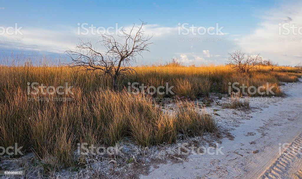 Dry grass in the desert illuminated by setting sun stock photo