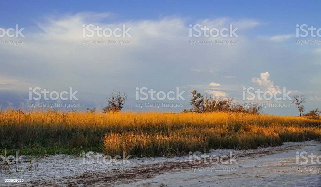 Dry grass in the desert illuminated by the setting sun stock photo