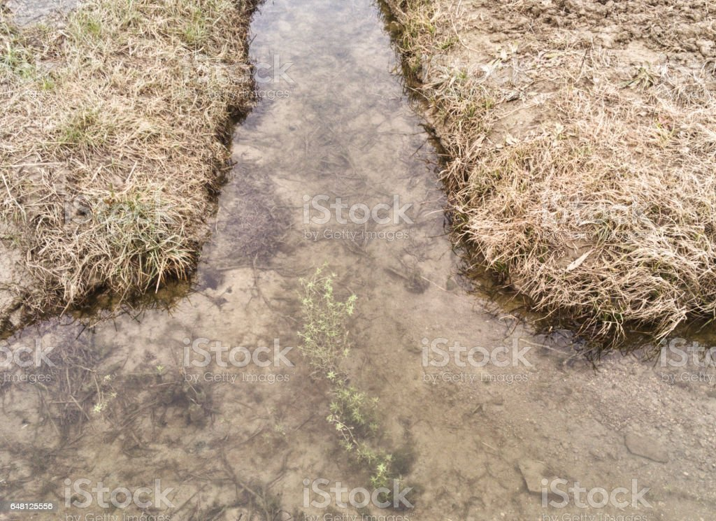 dry grass, irrigation channel, some water stock photo