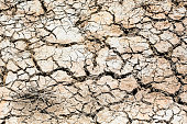 Dry Grass On The Cracked Soil