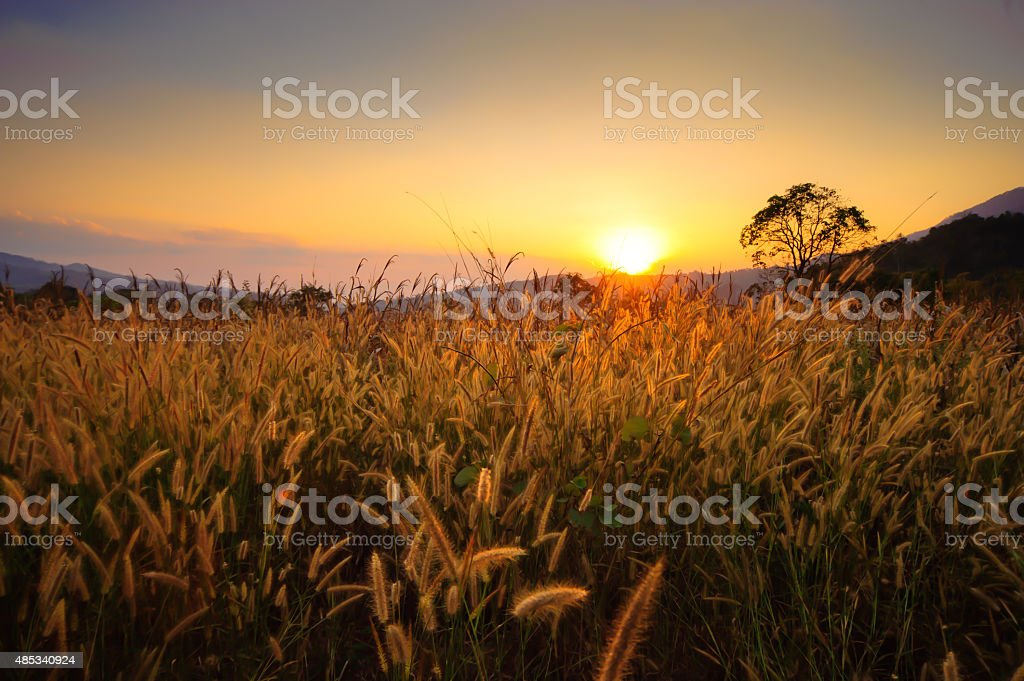 dry grass sky summer sunset stock photo