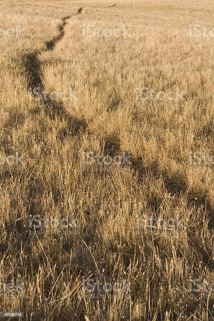 Dry grassland in late summer with path going to nowhere. stock photo