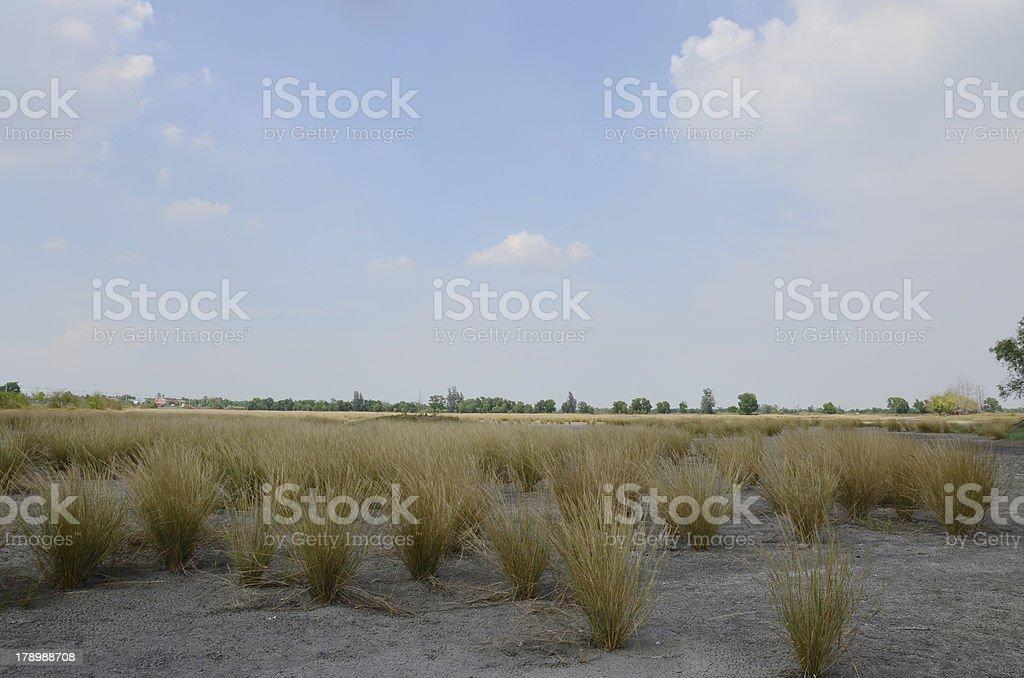 Dry grasslands royalty-free stock photo