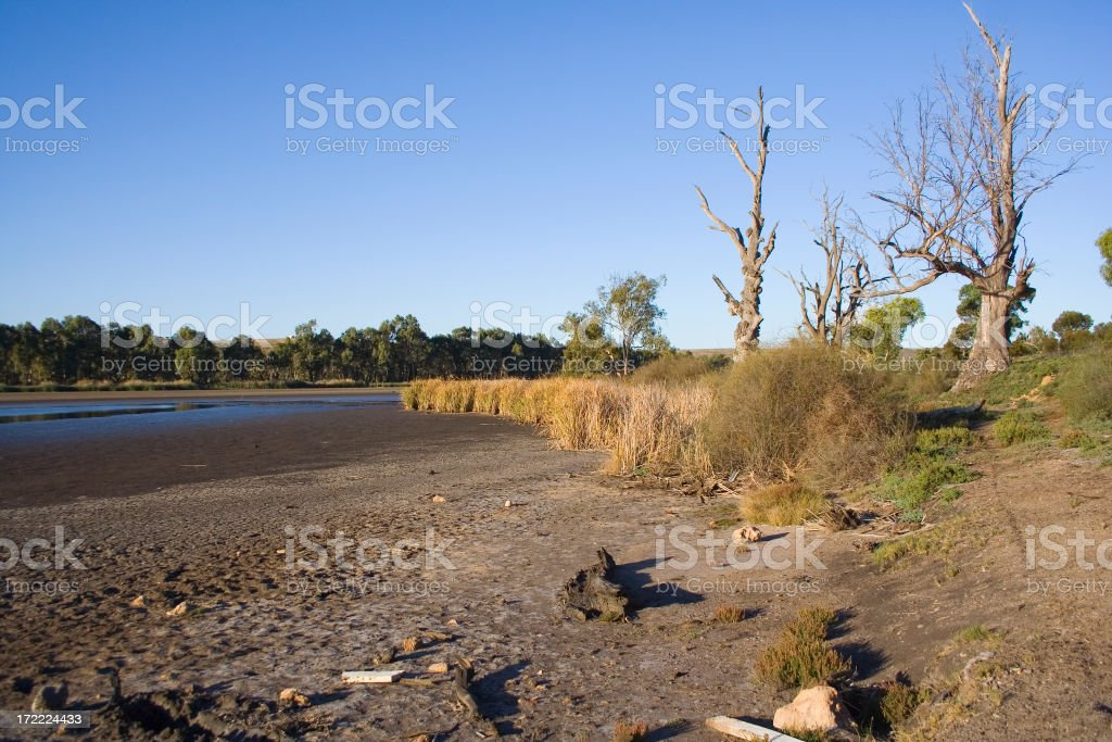 Dry ground and barren trees from a river drought stock photo