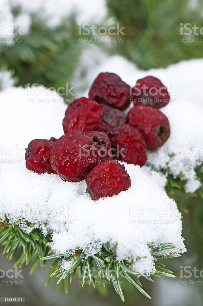 Dry haw on snow royalty-free stock photo