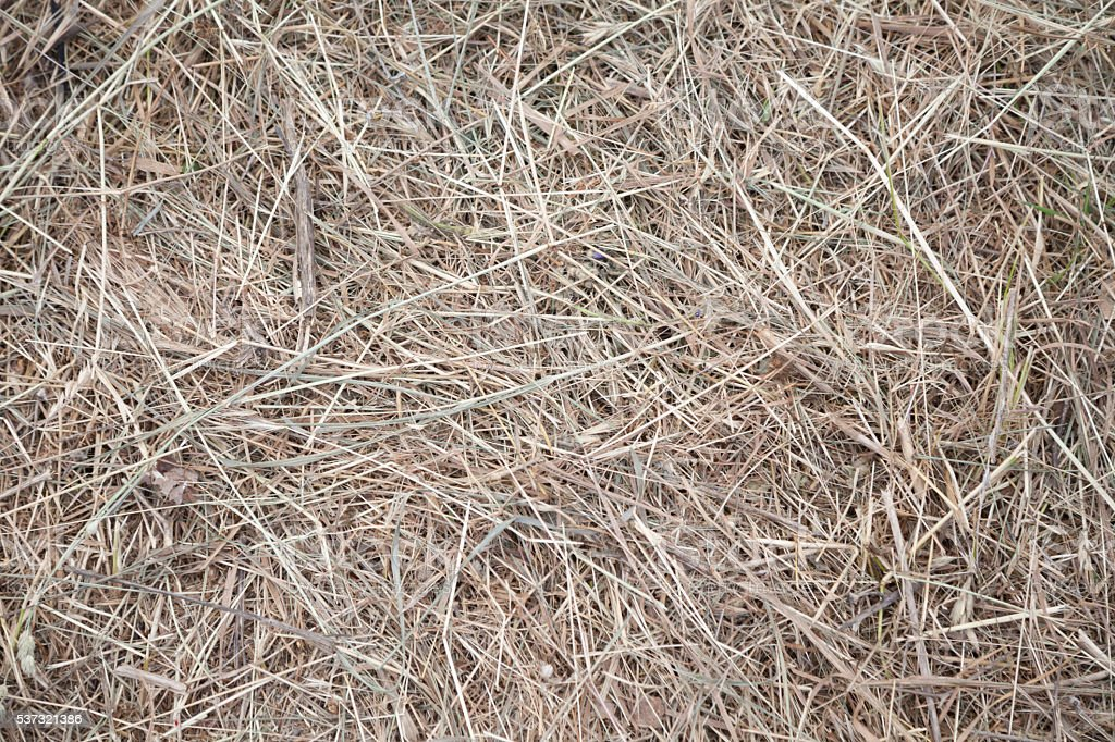 dry hay grass stock photo