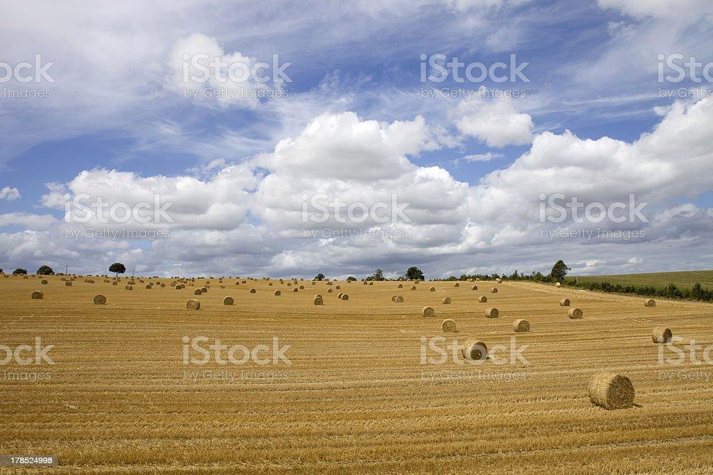 dry hay royalty-free stock photo