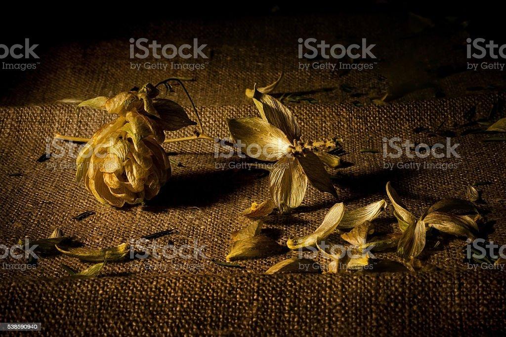 Dry hop on sacking stock photo
