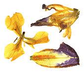 dry iris set
