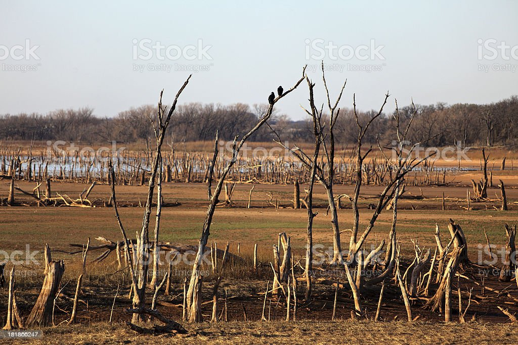 Dry Lake and Vultures or Buzzards royalty-free stock photo