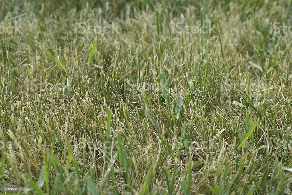 Dry lawn stock photo