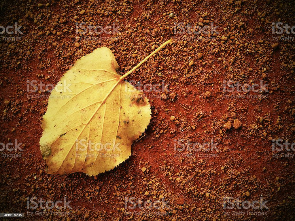 Dry leaf an tennis court. Dry light red bricks surface stock photo