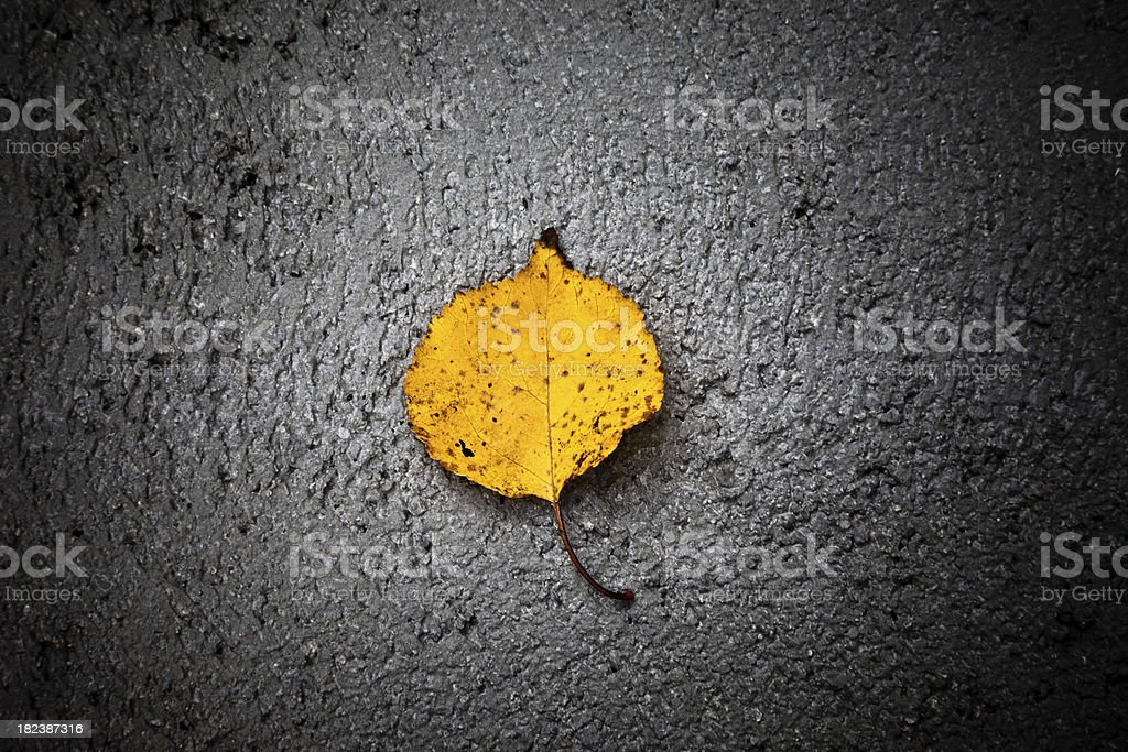 Dry leaf on a concrete background stock photo