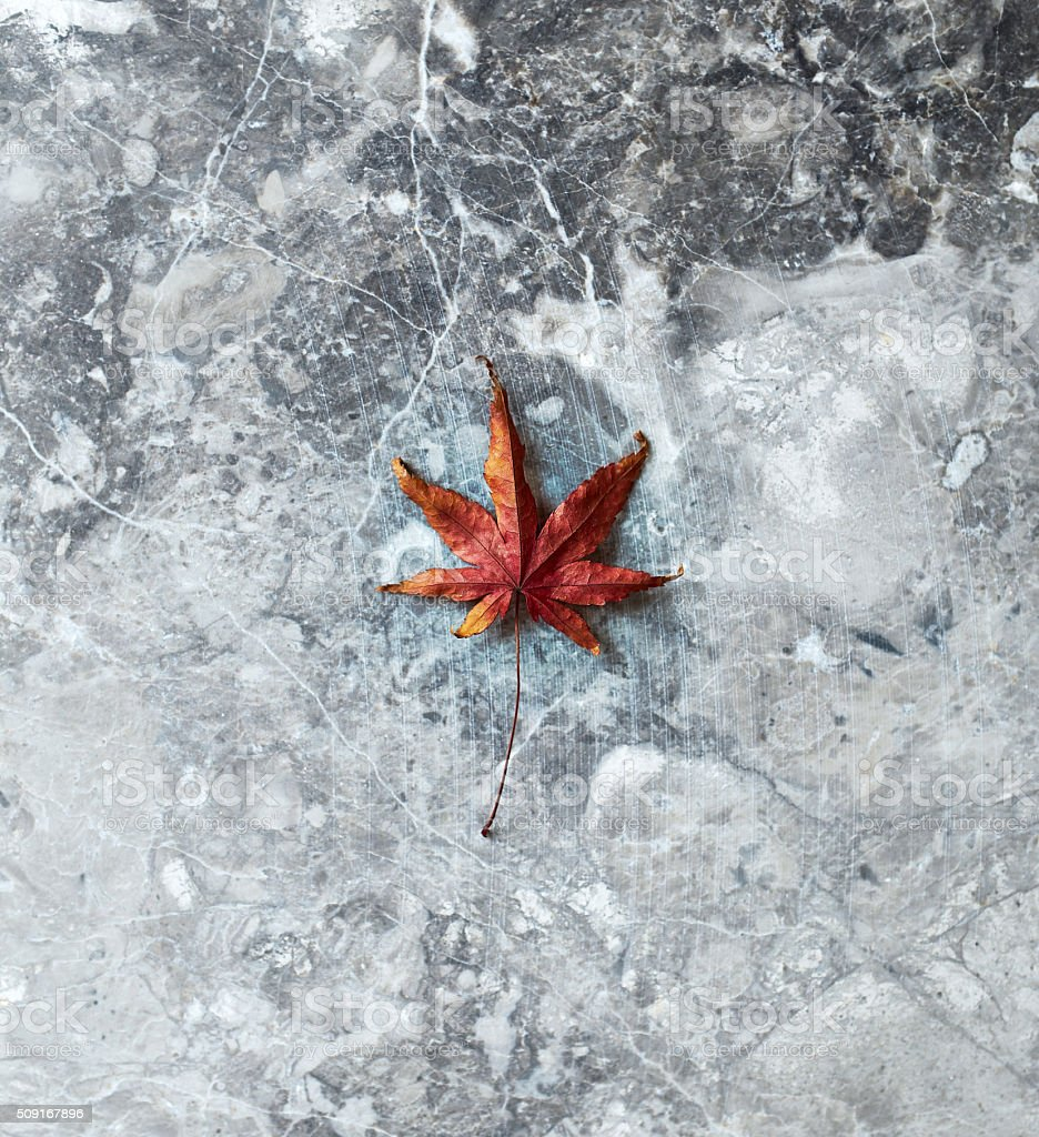 Dry leaf on a marble background stock photo